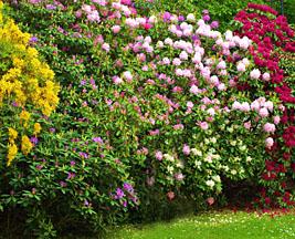 am nagement jardin id es conseils et plans pour cr er un jardin. Black Bedroom Furniture Sets. Home Design Ideas