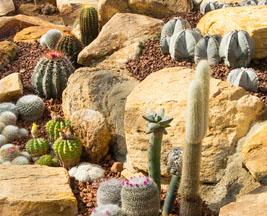 Cr er un massif de cactus for Comfaire un parterre de rocaille