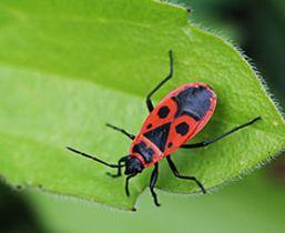 La faune du jardin animaux et insectes - Les animaux du jardin ...