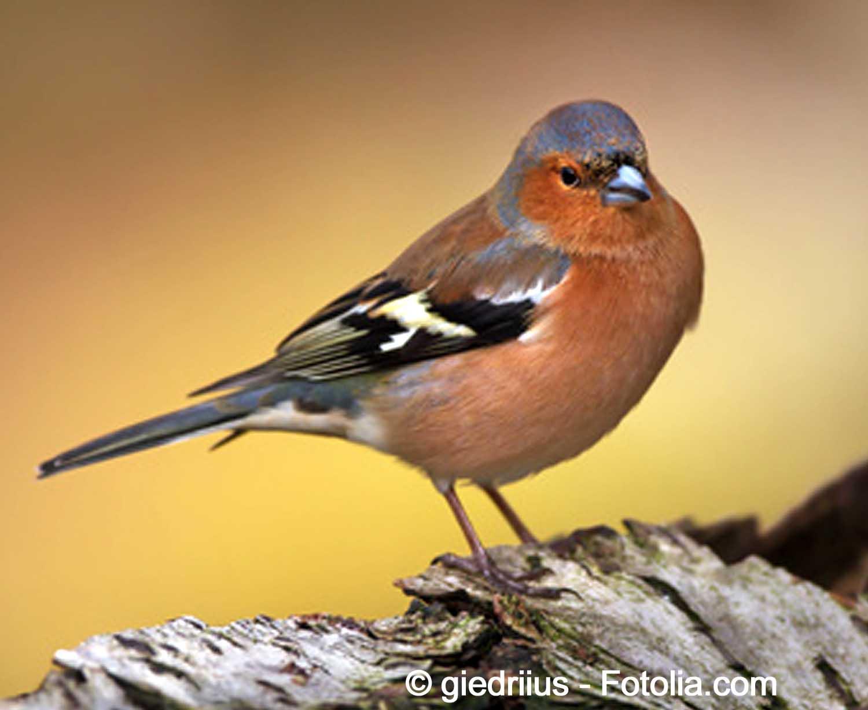 Echange de graines troc aux plantes et boutures - Graine de piment oiseau ...