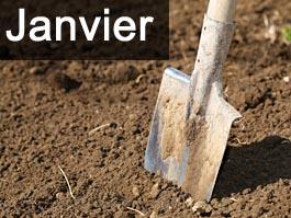 Travaux de jardinage en janvier for Travaux de jardinage