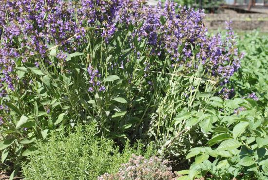 Cherche jardin ou terrain metz moselle for Cherche travaux jardinage