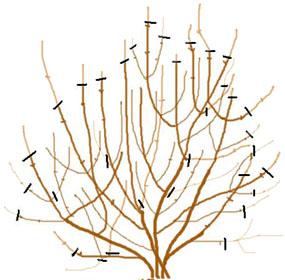 la taille des arbres arbustes et fruitiers