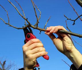 Magazine petit jardin n51 novembre 2010 jardinage plantes et fleurs - Arbre fruitier petite taille ...