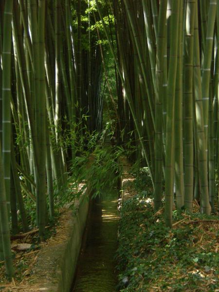 question jardin racines de bambou envahissantes. Black Bedroom Furniture Sets. Home Design Ideas
