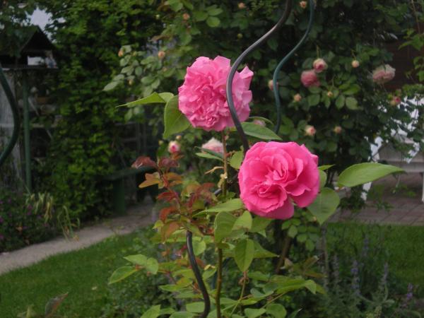 Question jardin j 39 ai ouvert mon potiron et j 39 ai trouv - J ai trouve un herisson dans mon jardin que faire ...