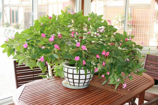 Goutte a goutte plante interieur 28 images achetez en for Arrosage plante interieur