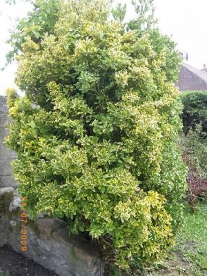 Identification de arbre et arbuste - Plante qui attire les moustiques ...