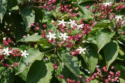 Identifier Identification De Arbre Et Arbuste