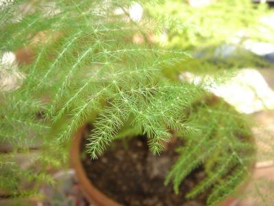 Plante d int rieur verte et d polluante de la jardinerie for Achat plante verte en ligne