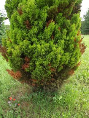 identifier identification de arbre et arbuste. Black Bedroom Furniture Sets. Home Design Ideas