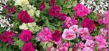 Magazine Petit Jardin N°127 - Septembre 2017 - Jardinage, plantes et fleurs