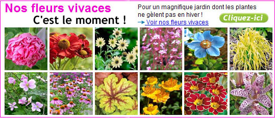 magazine petit jardin n 61 septembre 2011 jardinage plantes et fleurs. Black Bedroom Furniture Sets. Home Design Ideas